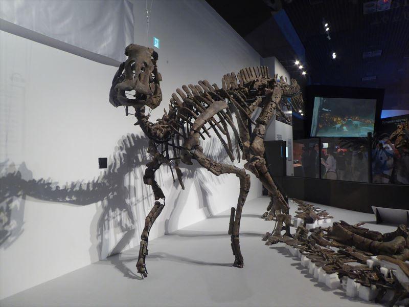 むかわ竜 化石