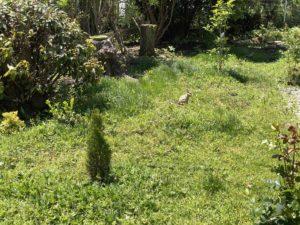 うさぎのいる庭